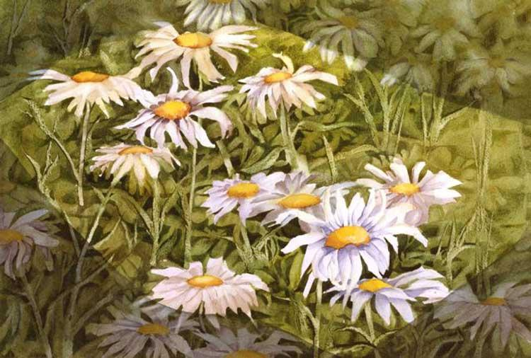 daisies_lg