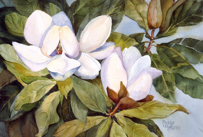 magnolia_lg