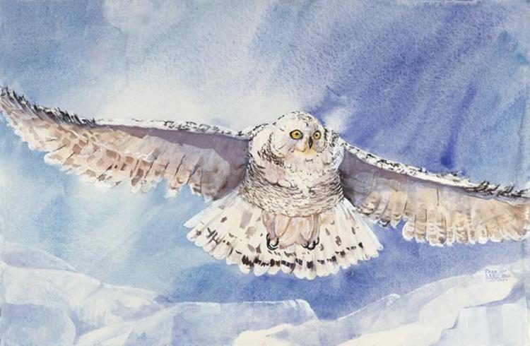 snow_owl_lg
