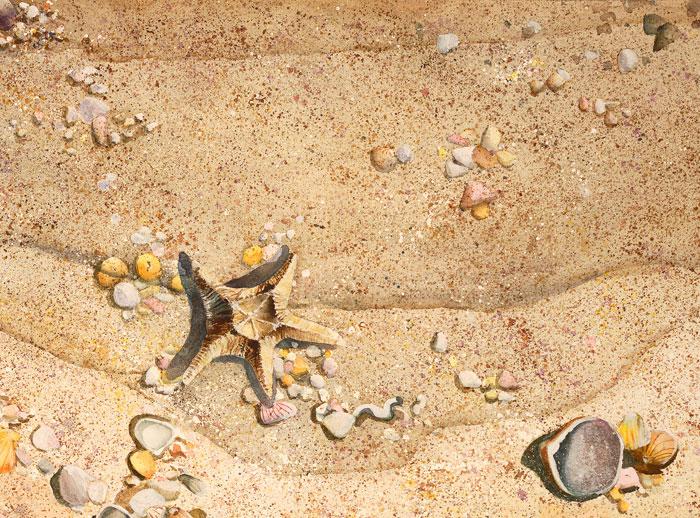 starfish_lg