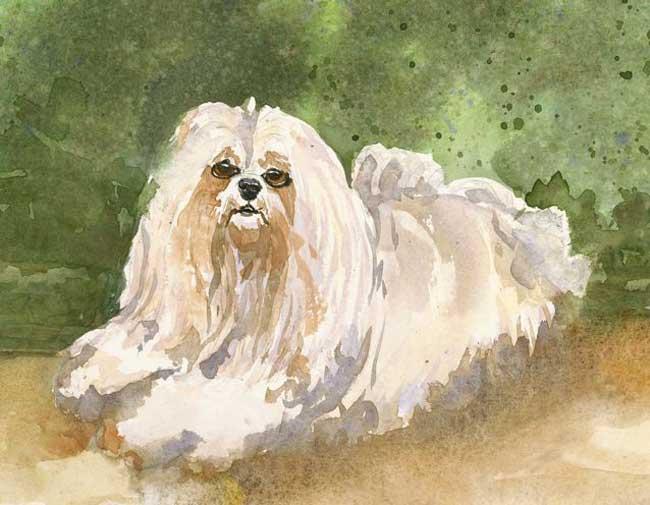 whitedog_lg